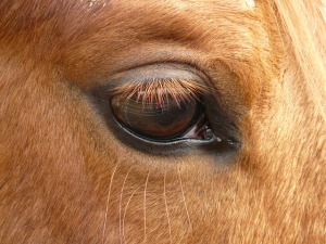 Can you identify this animal?  If you guessed horse, you're right!
